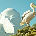 Peter the Pelican of Mykonos