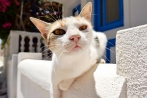 adopt_greek_cat