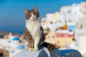 agean_cat