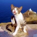 5 cute shots of Greek cats