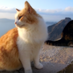 Greek cats, an unexpected travel companion