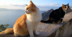 santorini_cats