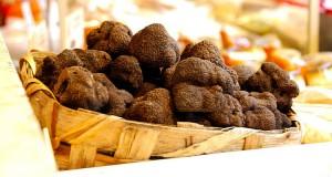 truffle_hunting