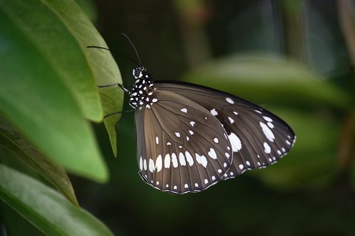 rhodes butterflies