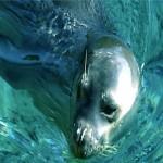 Alonnisos Marine Park: Nature at Its Best