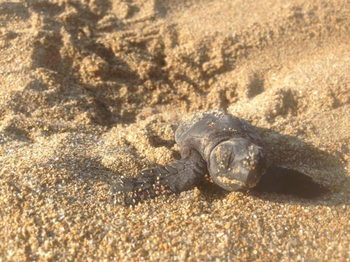 sea turtles kefalonia