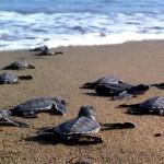 Magical Sea Turtles Kefalonia Attraction