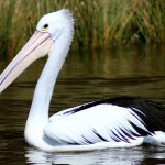 Birdwatching in Greece: Splendid Wildlife Observation