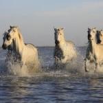 Horse Riding in Milos: A Unique Experience