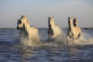 horse riding in milos
