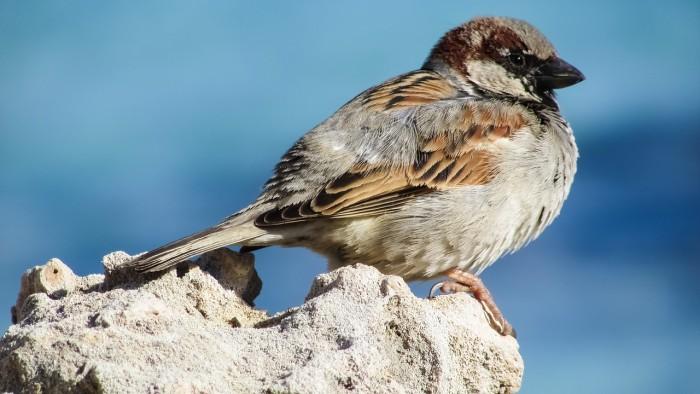 birdwatching in Greece