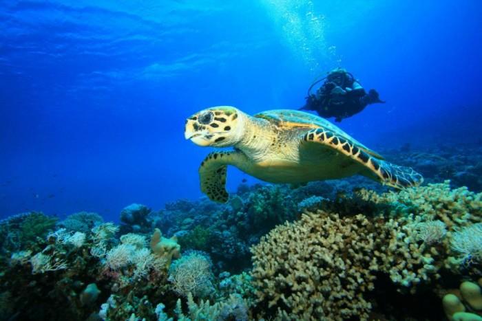 Zakynthos National Marine Park