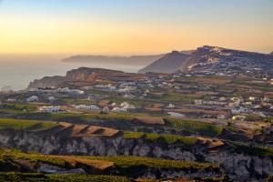 Santorini Vineyard