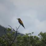 Tilos Hiking & Birdwatching