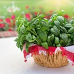 Tips for Herbs & Wild Plants