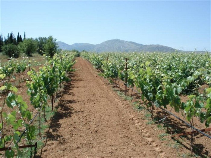 arcadia wine tourism
