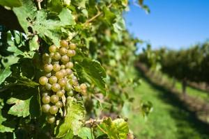 attica wine tourism