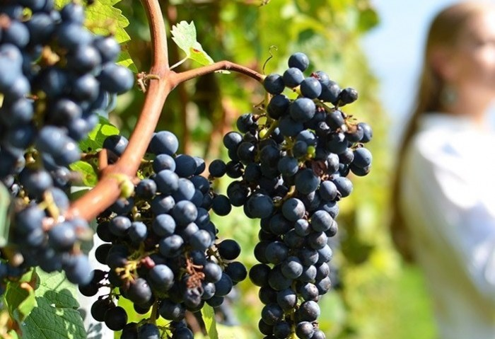 corinthia wine tourism