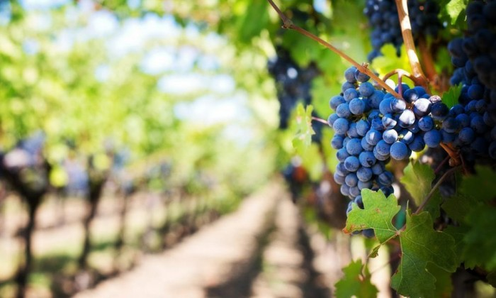 dodecanese wine tourism