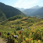Wine Tourism in Northern Greece: Epirus