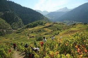 epirus wine tourism