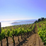 Wine Tourism in Northern Greece: Halkidiki