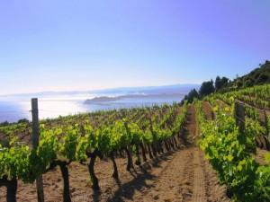 halkidiki wine tourism