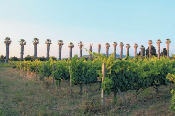 ilia wine tourism