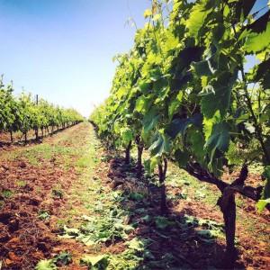 karditsa wine tourism
