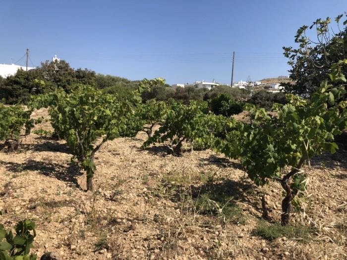 laconia wine tourism
