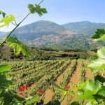 The Wine Route of the Olympian Gods