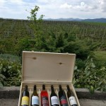 Wine Tourism in Northern Greece: Pella – Goumenissa