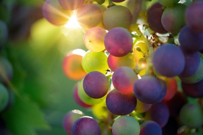 wine tourism in messinia